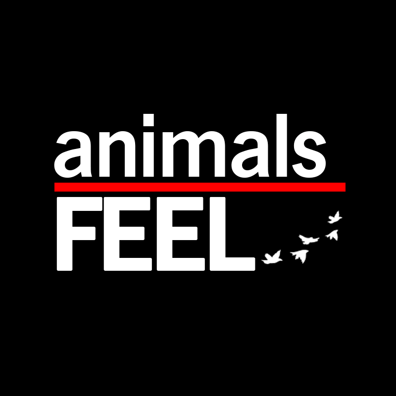 Animals Feel